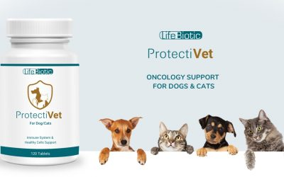 Introducing ProtectiVet – Oncology Support for Pets
